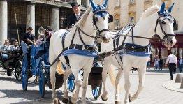 Oostenrijk, Steiermark - Wenen paardenkoets