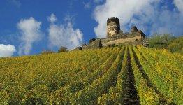 Wijngaarden langs de Rijn