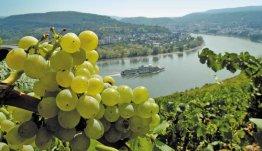 Rijndal heerlijk wijngebied