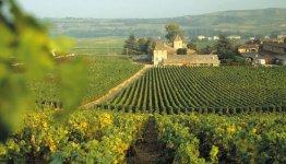 Wijnvelden in de Bourgogne