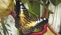 Vlindertuin bij Grevenmacher