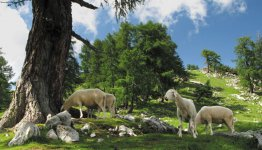 Ook het binnenland van Slovenië is meer dan de moeite waard