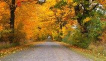 De herfstkleuren zijn prachtig in de omgeving van Hotel Alter Speicher