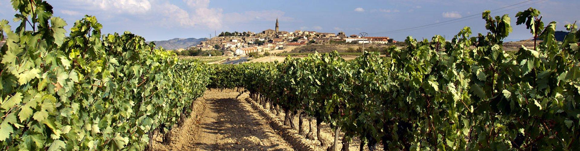 Spanje - Rioja