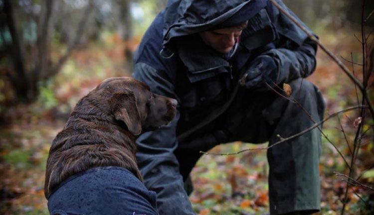 Auberge des Moissons - labrador Honey zoekt de lekkerste truffels