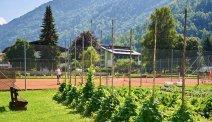 Familiengut Burgstaller heeft een tennisbaan