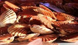 Geniet van de zeeverse fruits de mer in Bretagne, Frankrijk