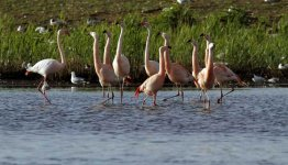 3-Daags Fietsarrangement Borken, de bijzondere flamingoroute