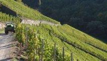 Wijnveld op de heuvels langs de moezel