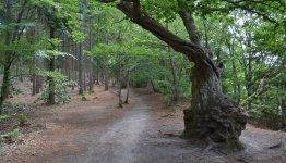 Almindso bos in de gemeente Silkeborg