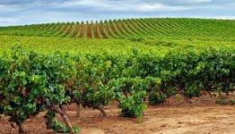 Prachtige wijnstreek Rioja